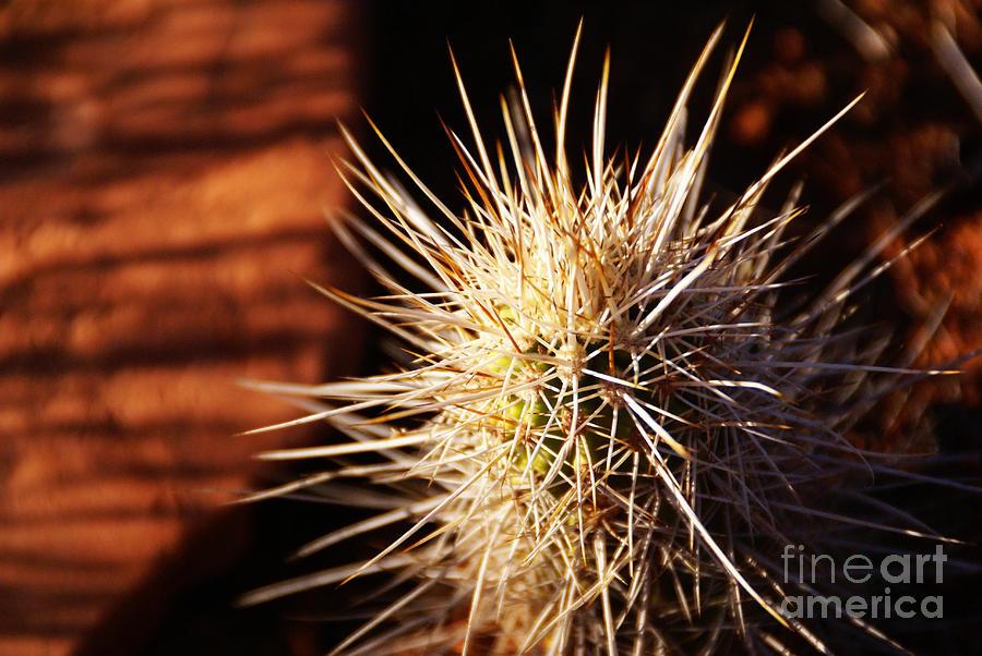 Desert Photograph - Sedona by Linda Shafer