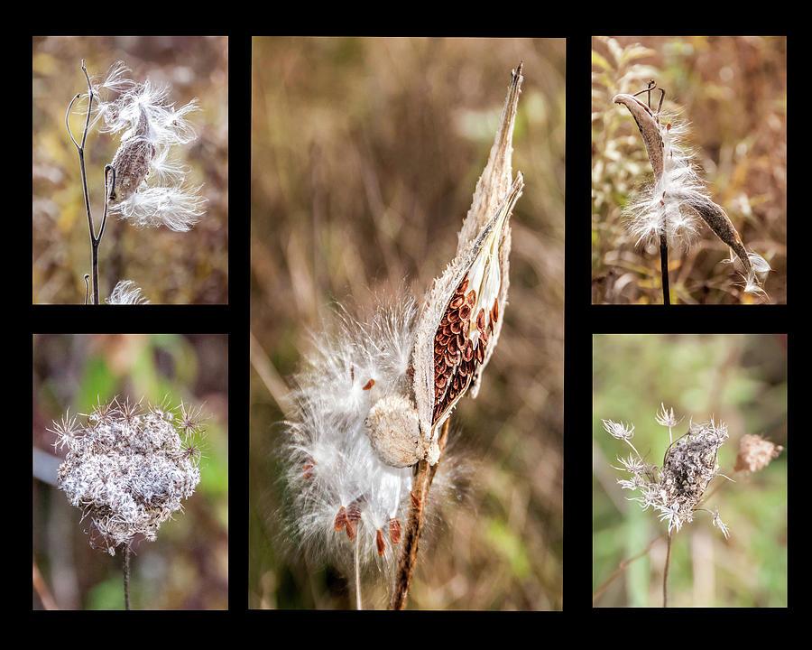 Seed Collage by Geraldine Alexander