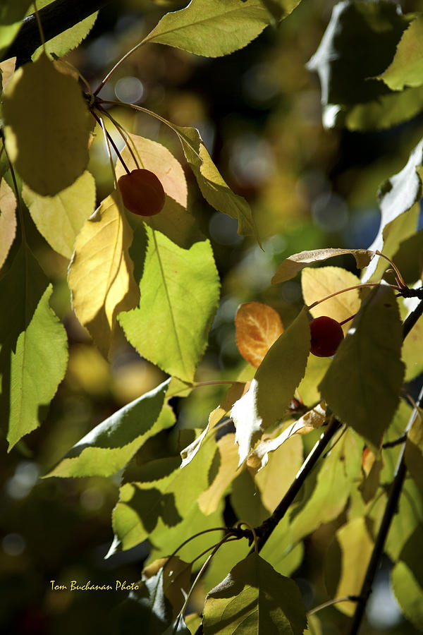 Seeds Photograph - Seed Pods In The Fall by Tom Buchanan