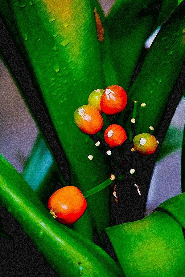 Flowers Digital Art - Seeds by John Toxey