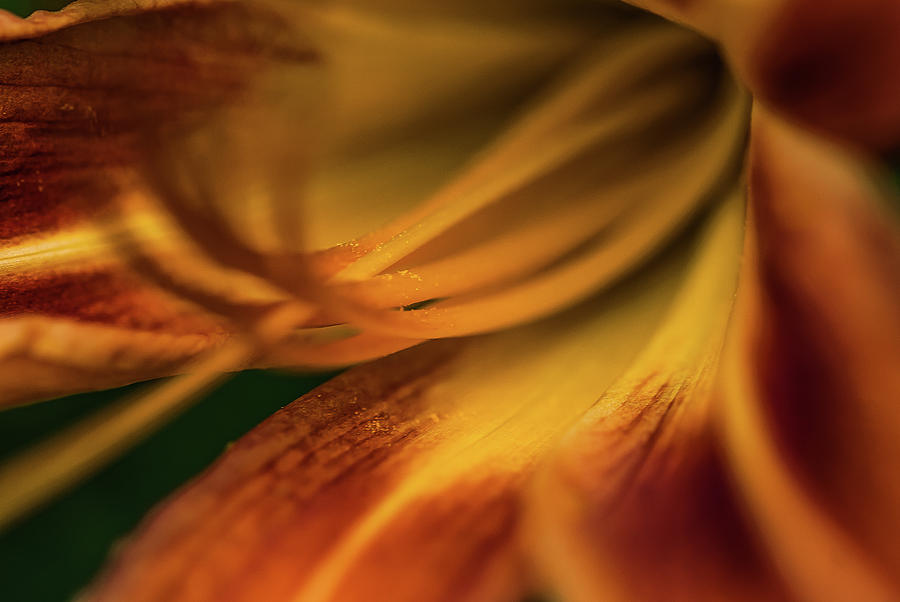 Seeds Of Life - 0964 by G L Sarti