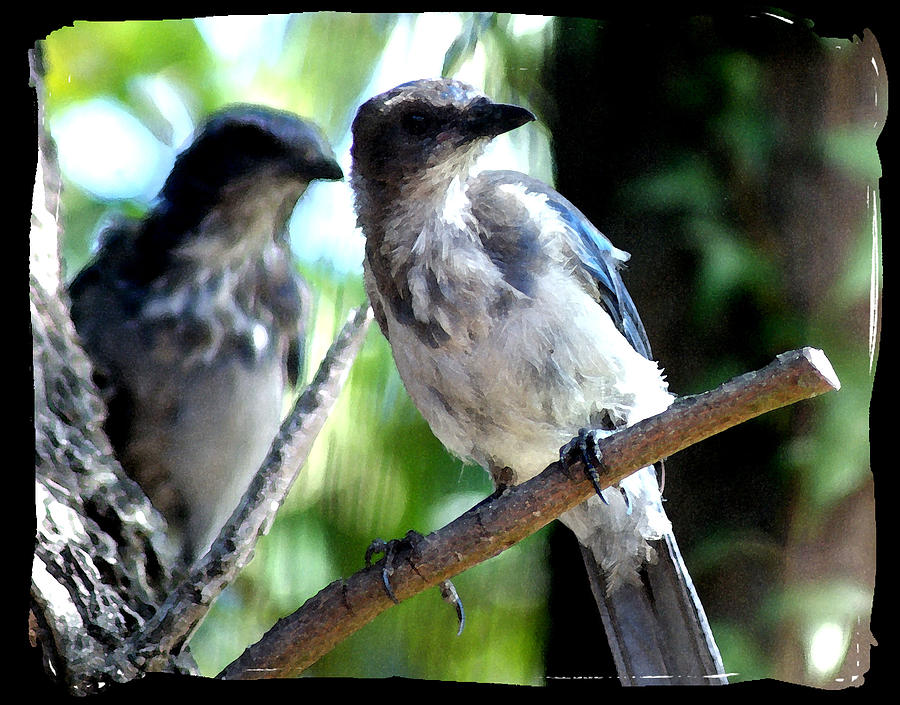 Bird Photograph - Seeing Double by Ellen Lerner ODonnell