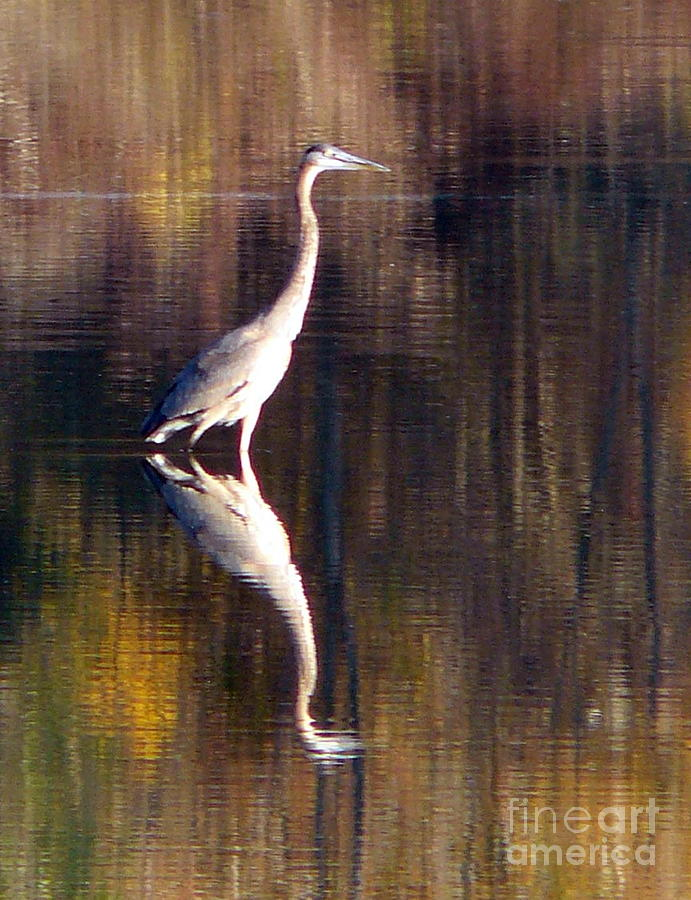 Blue Heron Photograph - Seeing Double by Susan Olga Linville