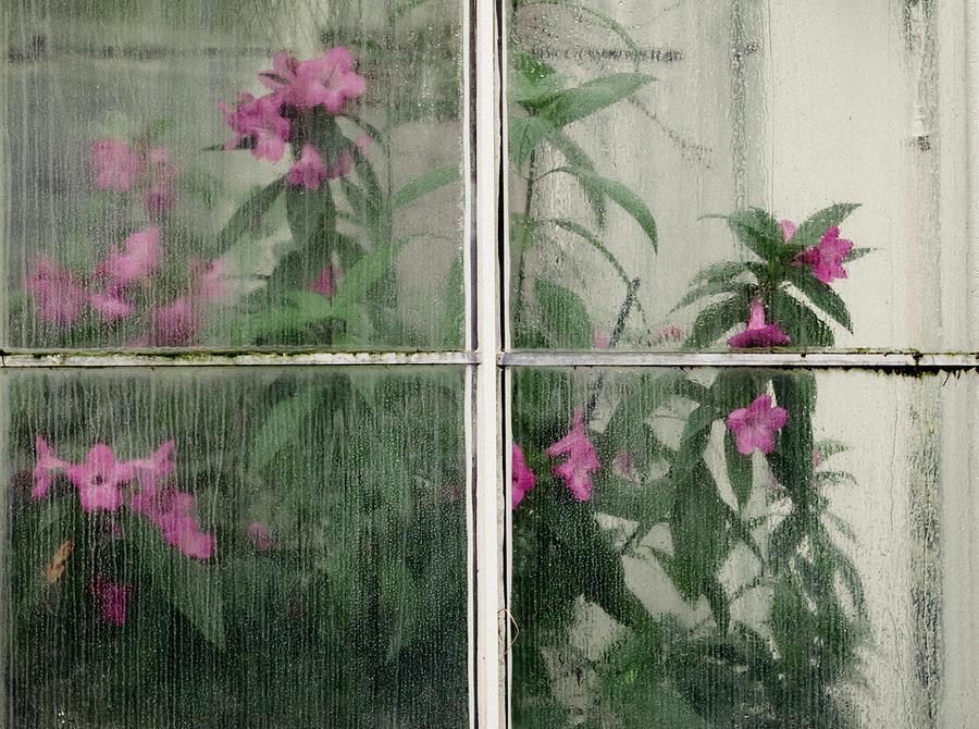Seeing Through by Lynn Wohlers