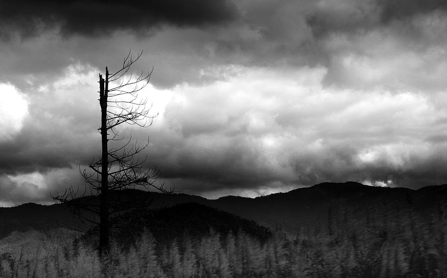 Landscapes Photograph - Seeking New Horizons by Holly Kempe