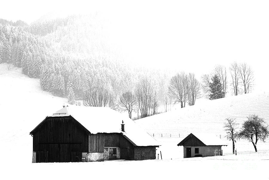 Winter Photograph - Seen Many Storms by Sabine Jacobs