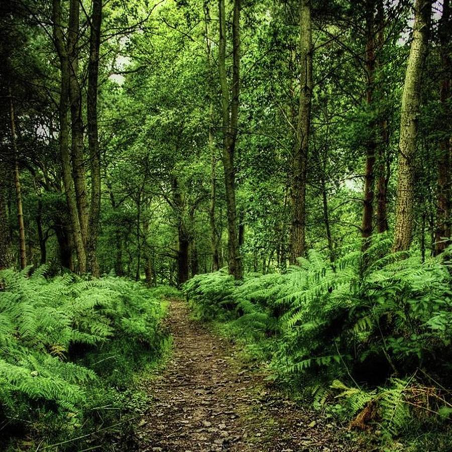 Nature Photograph - Seeswood, Nuneaton by John Edwards