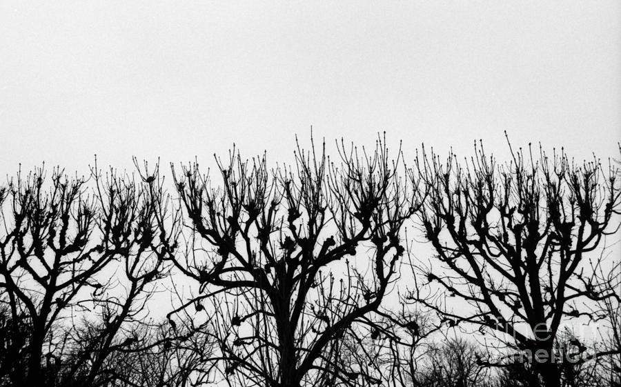Gray Photograph - Seine River Trees by Tamarra Tamarra