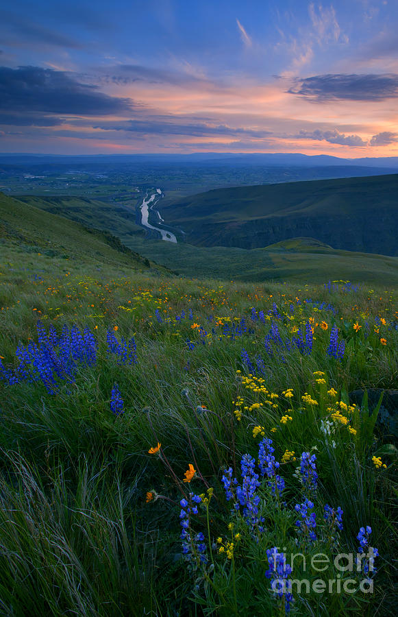Wildflowers Photograph - Selah Sunset by Mike  Dawson