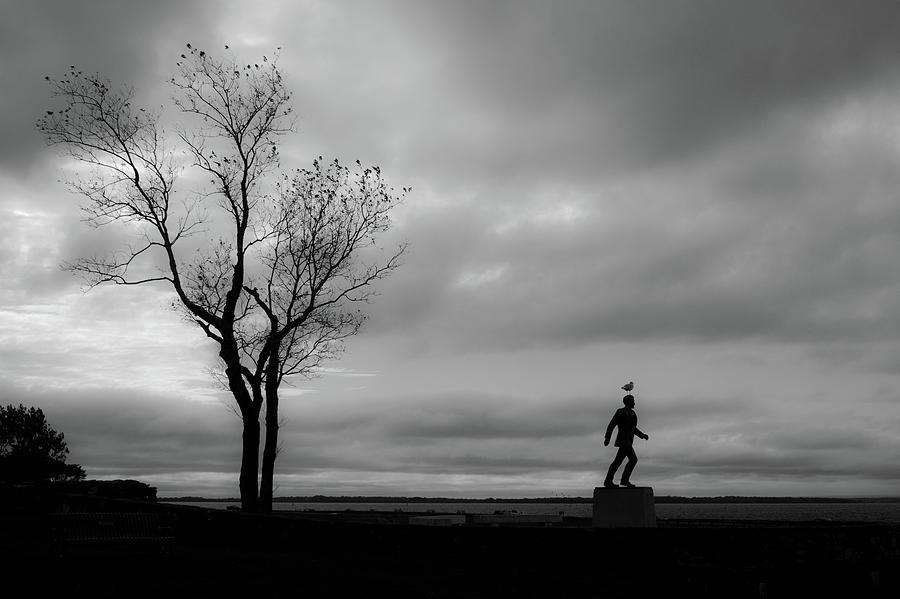 Rhode Island Photograph - Senator Chafee And The Tree by Nancy De Flon