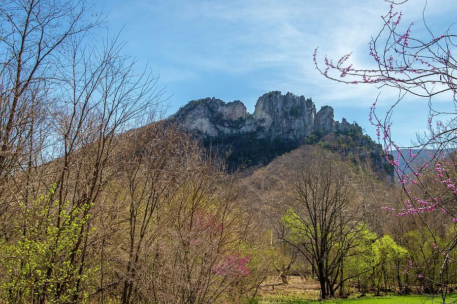 Seneca Rocks Spring by Chris Berrier
