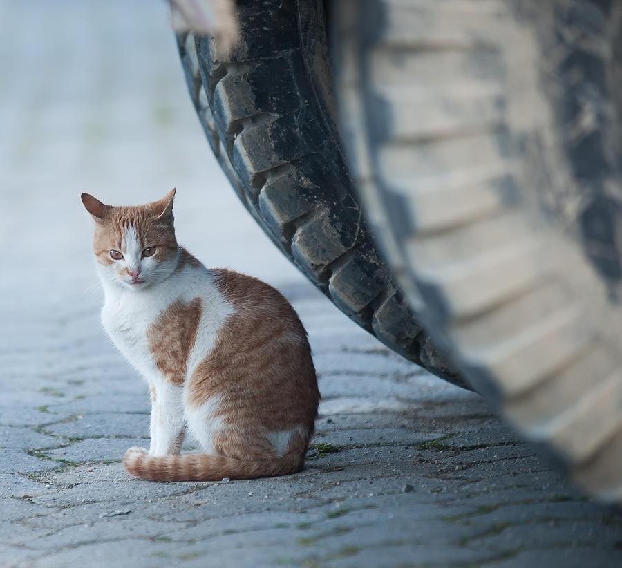 Animal Photograph - Sensing The Danger by Jonas Sundberg