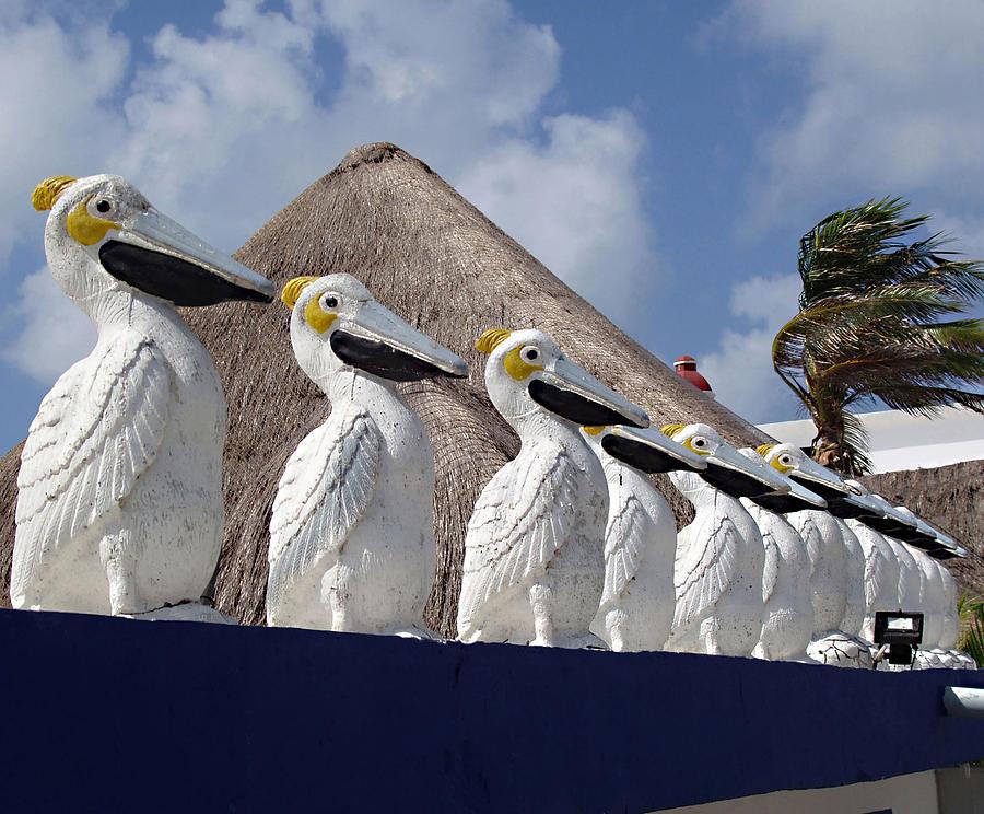 Puerto Morelos Photograph - Sentry Pelicans by Ellen Henneke