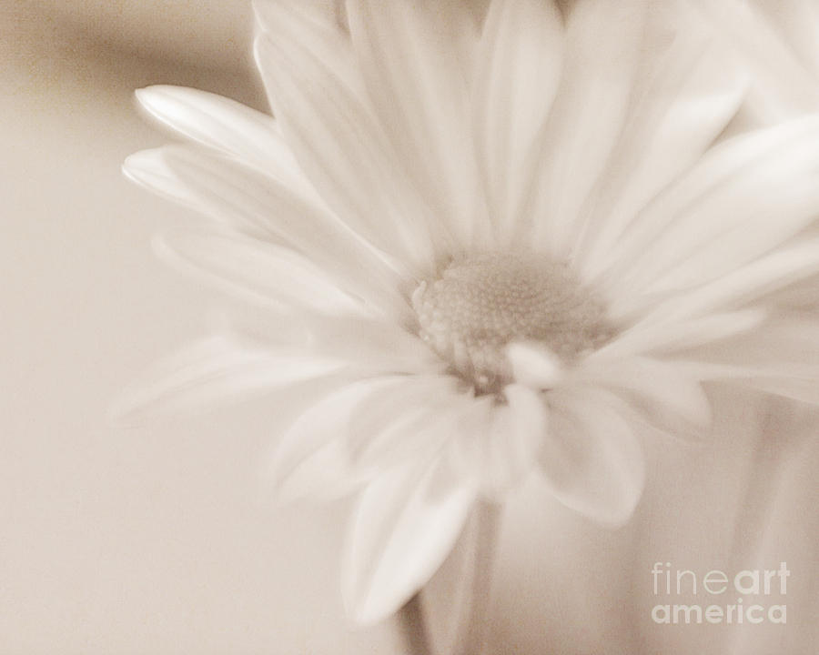 Flower Photograph - Sepia Daisy by Lisa McStamp