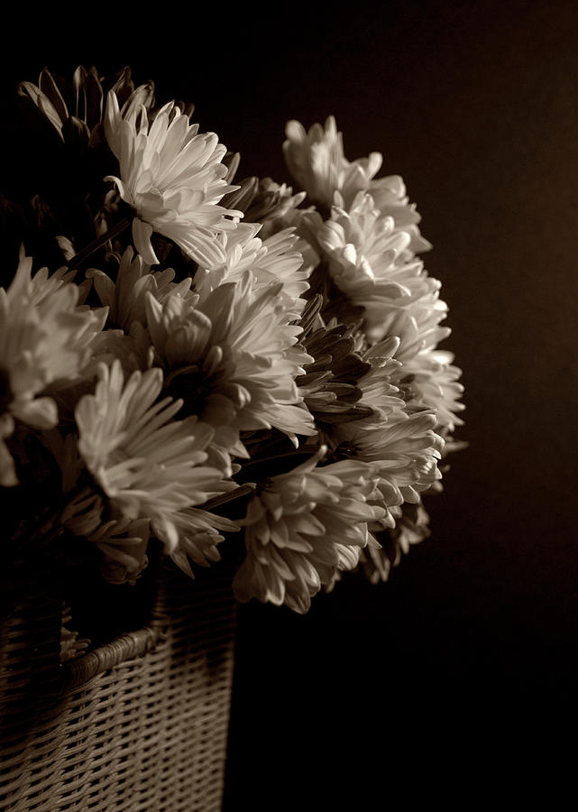 Flowers Photograph - Sepia Flowers by Jessica Wakefield