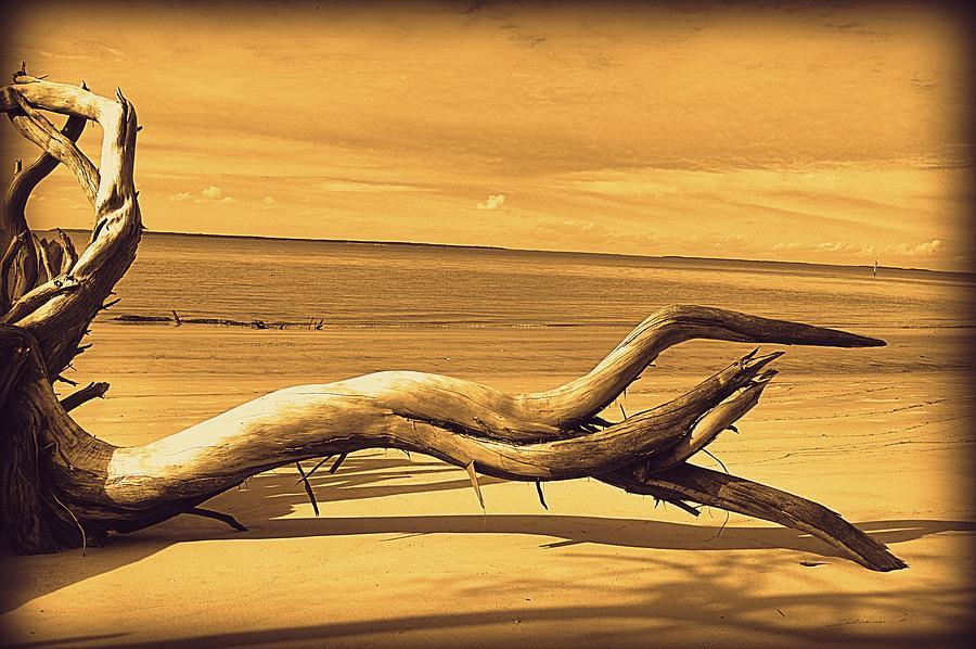 Sepia Tone Driftwood by Linda Covino