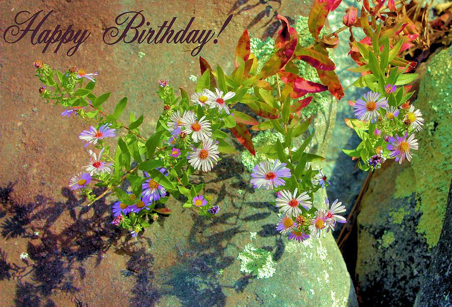 Happy Birthday Photograph - September Birthday Aster by Kristin Elmquist