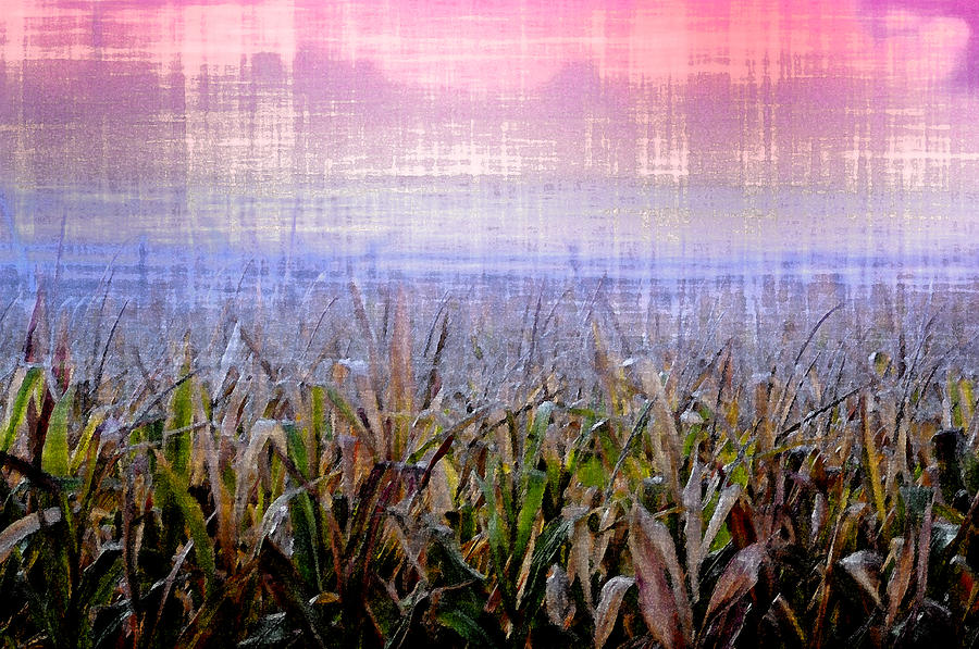 September Photograph - September Cornfield by Bill Cannon