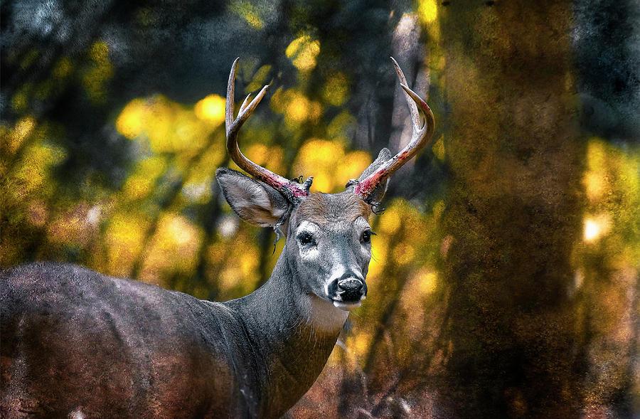 Deer Photograph - 2016 Art Series #5 by Garett Gabriel
