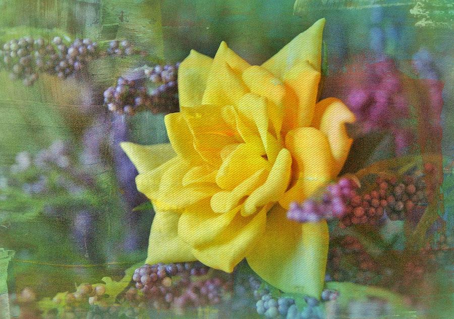 September Rose Photograph