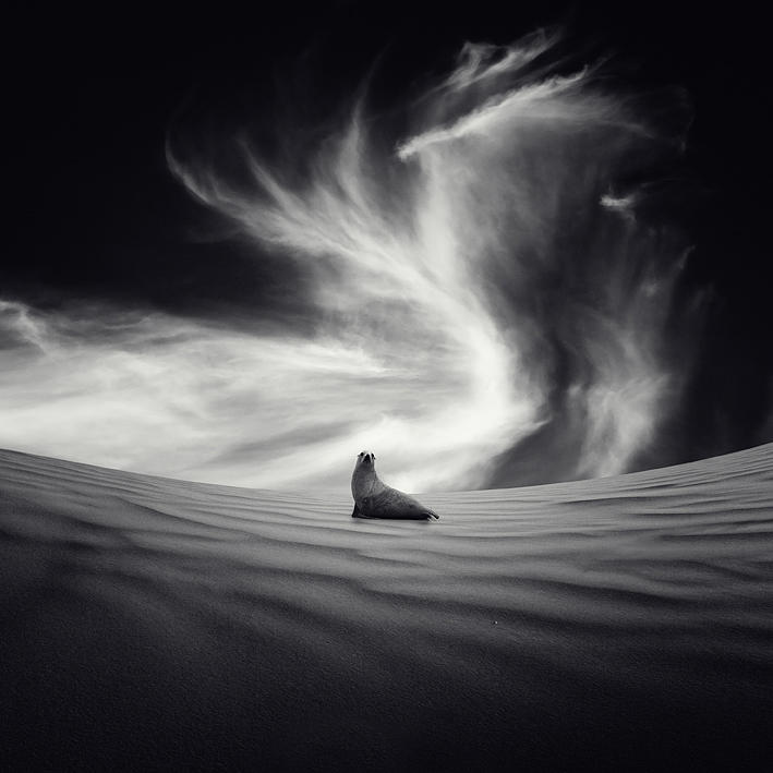 Sequia Photograph by Luis  Beltran