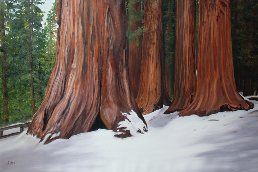 Sequoias by Marg Wolf