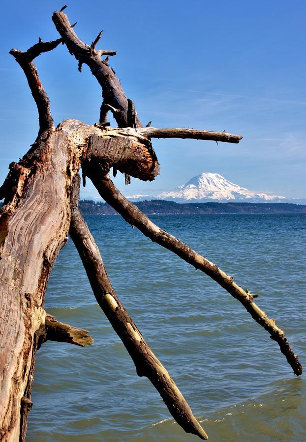 Serendipitous Driftwood Photograph