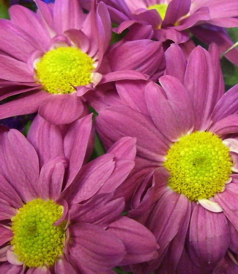 Flower Photograph - Serendipity by Kimberly Morin