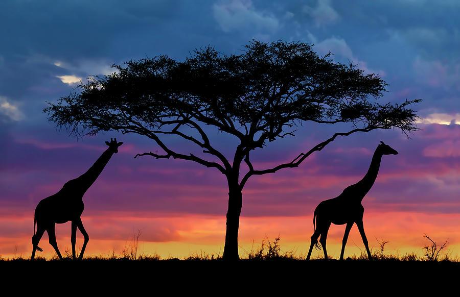 Sunset Photograph - Serengeti Sunset by Stu  Porter