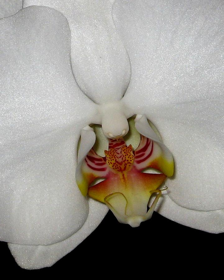 Orchid Photograph - Serenity by Betnoy Smith