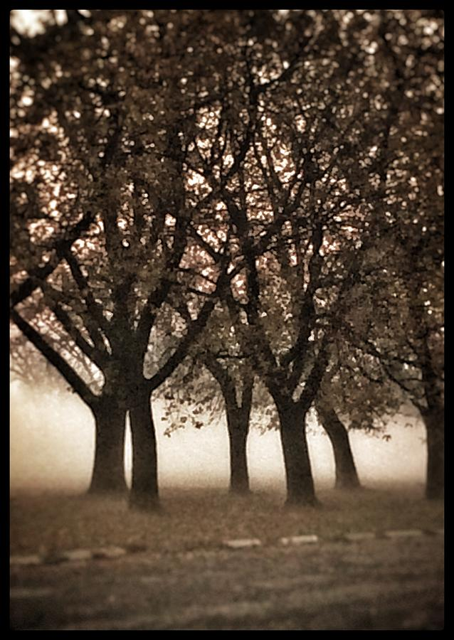 Serenity by Christine Paris