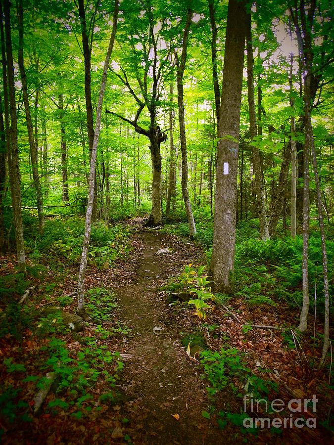 Serenity On The Appalachian Trail by Glenn Gordon