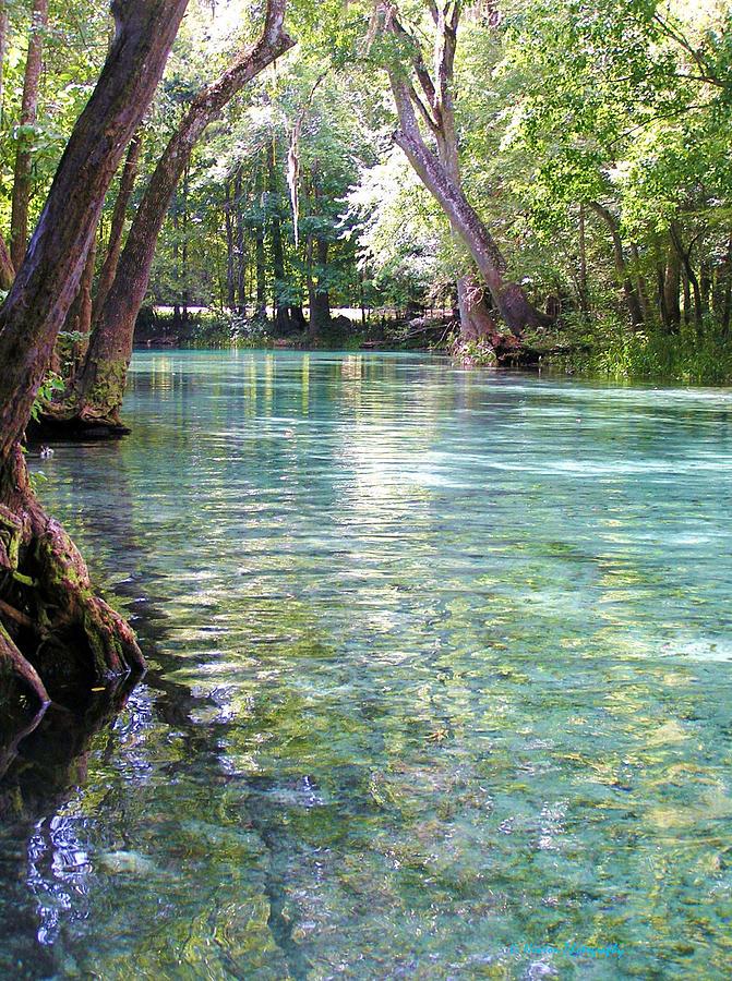 Ginnie Springs Photograph - Serenity by Li Newton