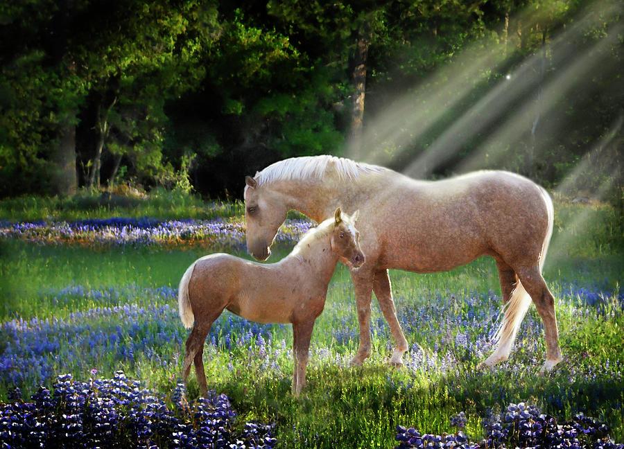 Animals Photograph - Serenity by Melinda Hughes-Berland