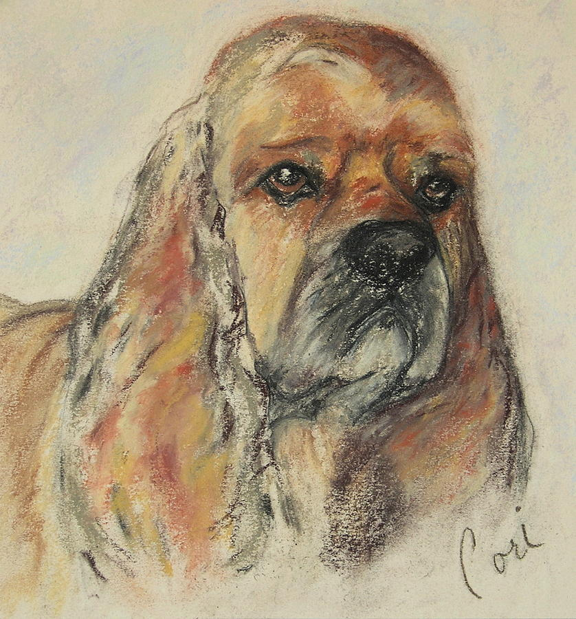 Dog Drawing - Serious Intent by Cori Solomon