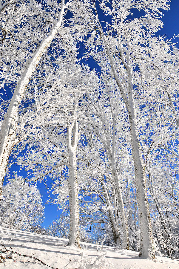 Snow Photograph - Serious Rime Frost by Alan Lenk