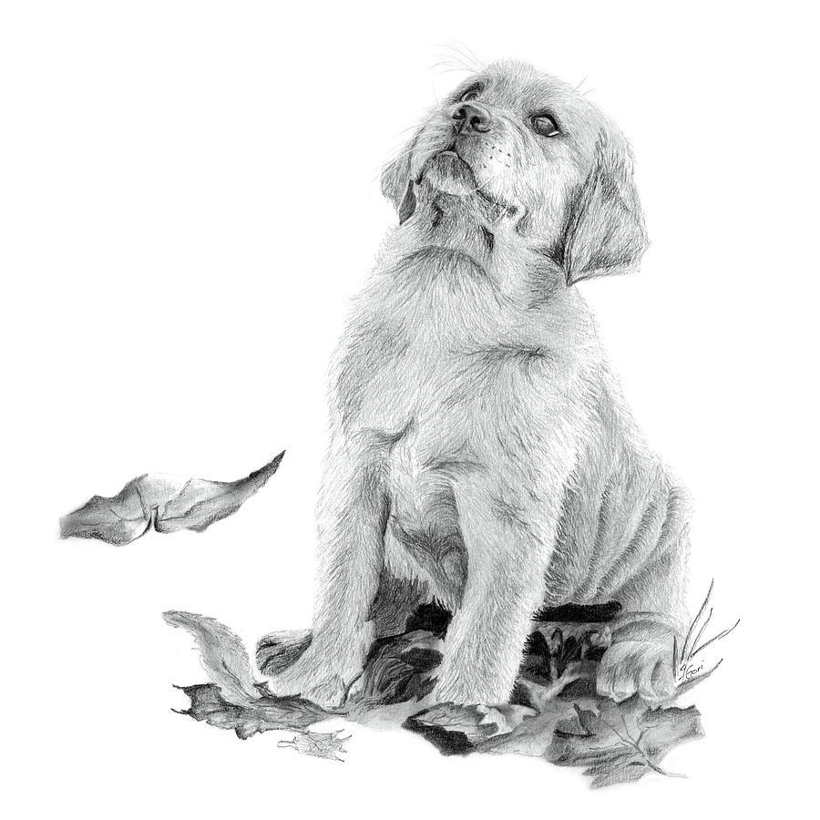 Service Dog Cuteness By Jacqueline Gori