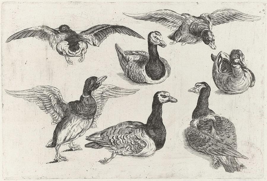 size 40 2686b 8fdb4 Seven Ducks, Wenceslaus Hollar, 1646 - 1647