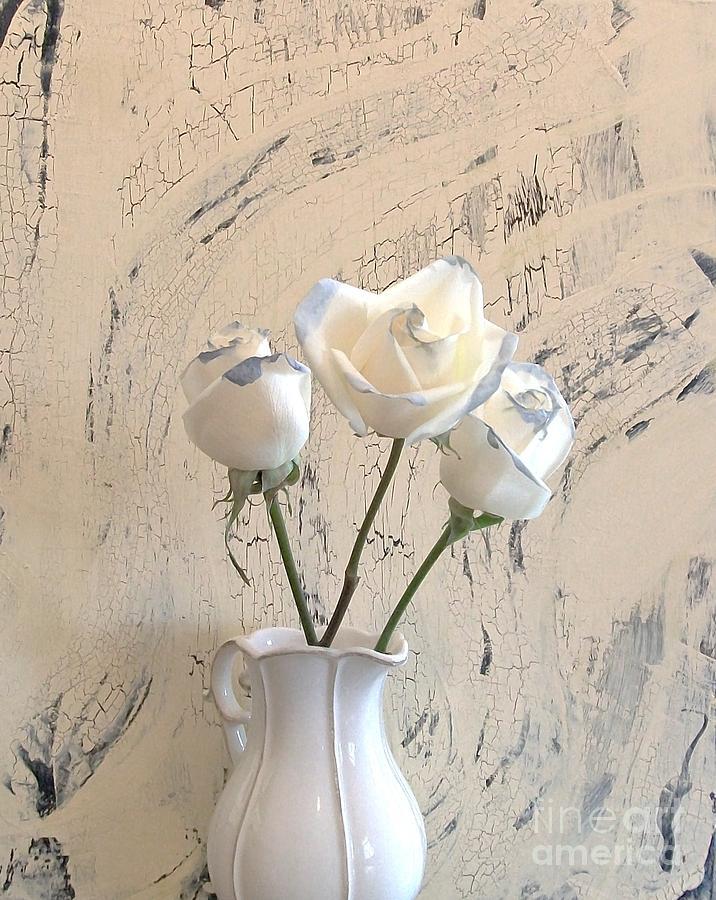 Photo Photograph - Shabbi Chic Roses by Marsha Heiken
