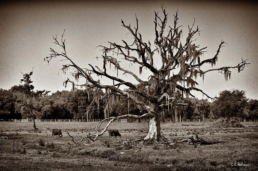 Tree Photograph - Shade Free - Sepia by Christopher Holmes