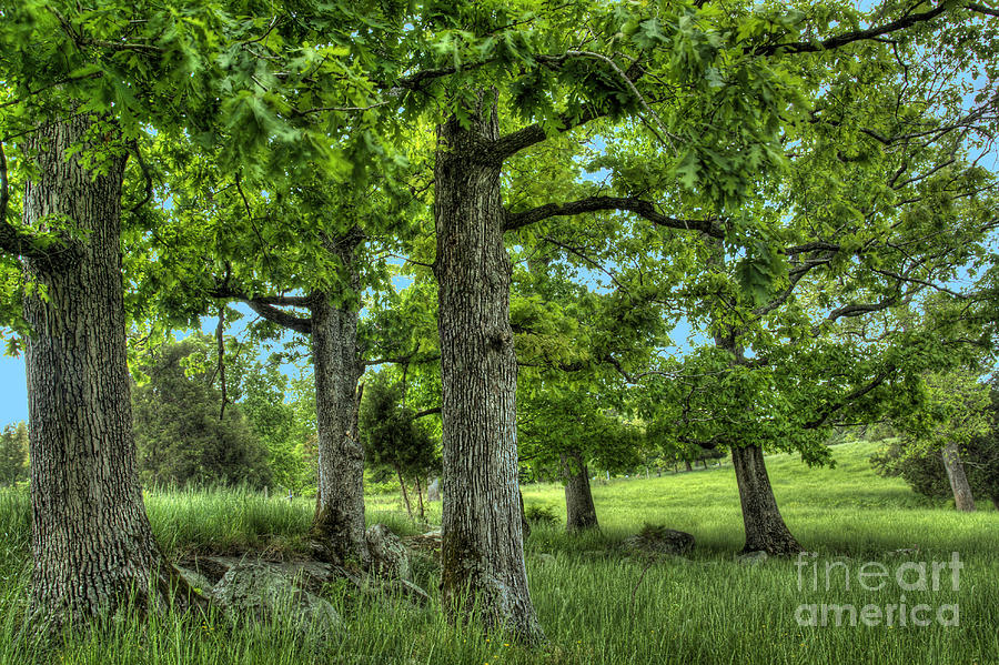 Peace Project Photograph - Shade Trees by Pete Hellmann