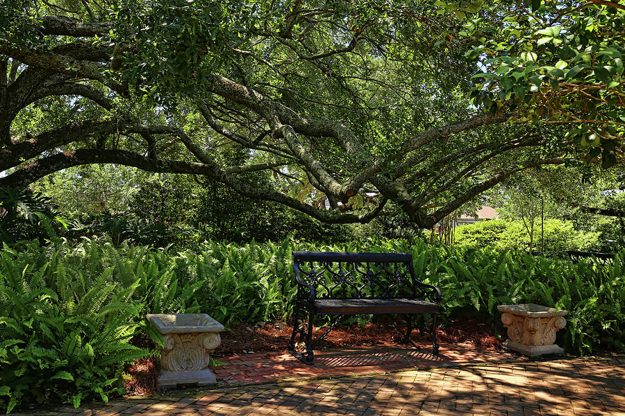 Shaded Garden Photograph By Judy Vincent