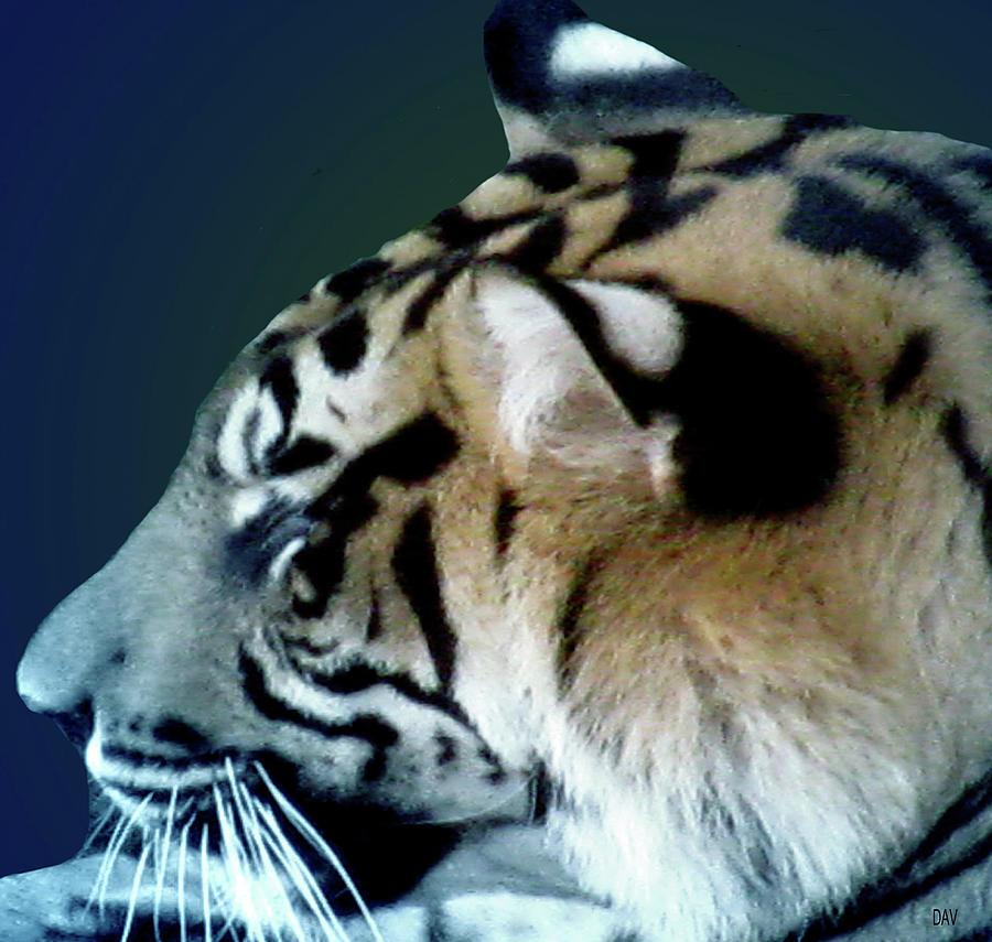 Tiger Blues Yum Photograph - Shades Of A Tiger  Series by Debra     Vatalaro