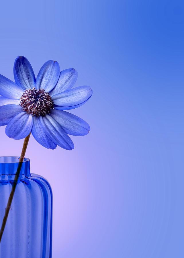 Blue Flower Photograph - Shades Of Blue by Mark Rogan