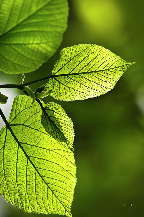 Green Photograph - Shades Of Green by Christina Rollo