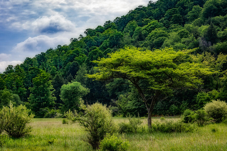 Clouds Photograph - Shades Of Green by Guy Whiteley