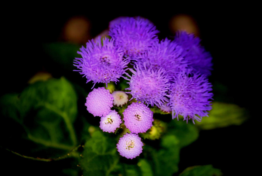 Purple Photograph - Shades Of Purple by Karen Scovill