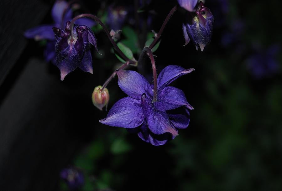 Purple Flower Photograph - Shades Of Purple by Marilynne Bull