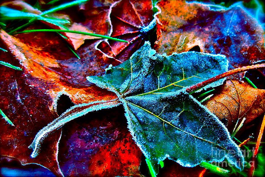 Nature Photograph - Shades Of Washington by Gwyn Newcombe