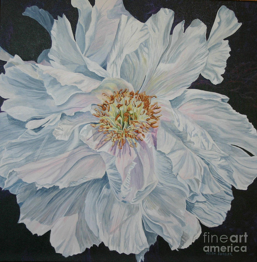 Tree Peony Painting - Shades Of White by Helen Shideler